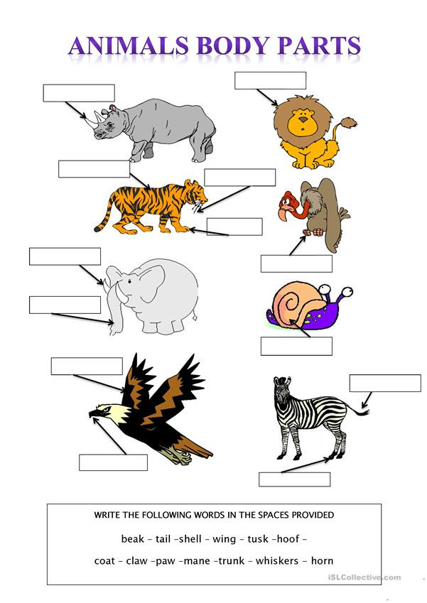 Animal Body Parts English ESL Worksheets for distance