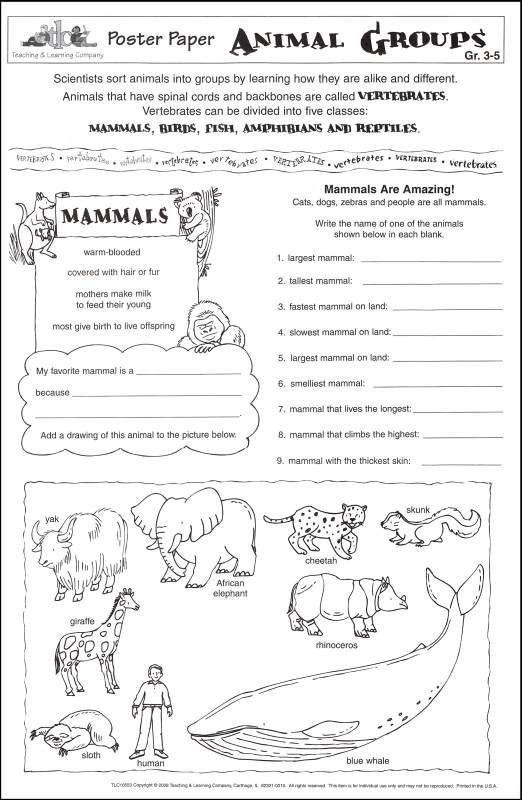 Classification Of Animals Worksheet