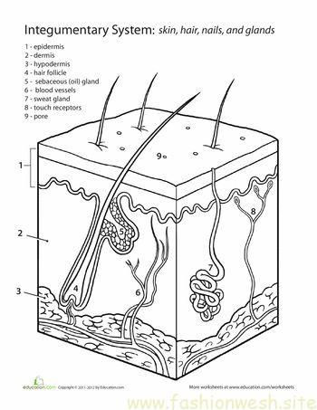 Inside Out Anatomy The Integumentary System anatomy