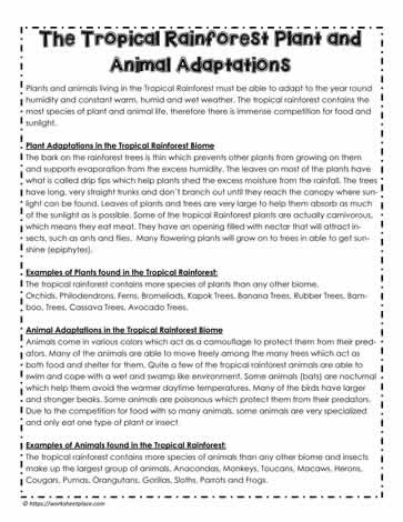 Rainforest Animal and Plant Adaptations Worksheets